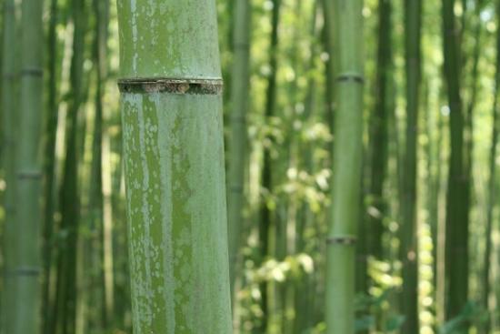 Bamboo type