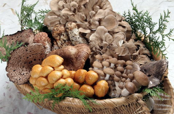 Mushroom nutrition full mark