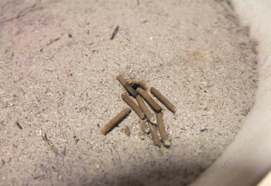 Incense stone ash