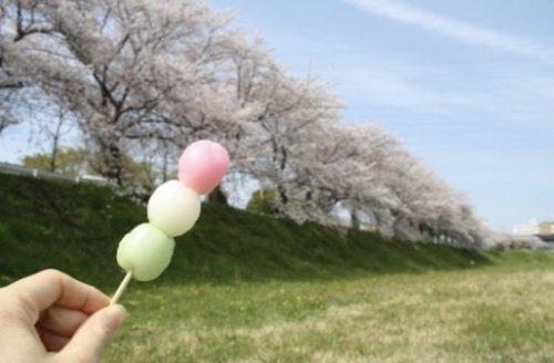 Nara cherry blossom viewing