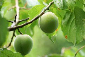 What is the origin of the rainy season?