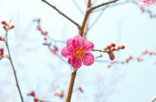 梅の花も可愛い