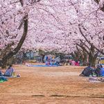 お花見は日本のアウトドア