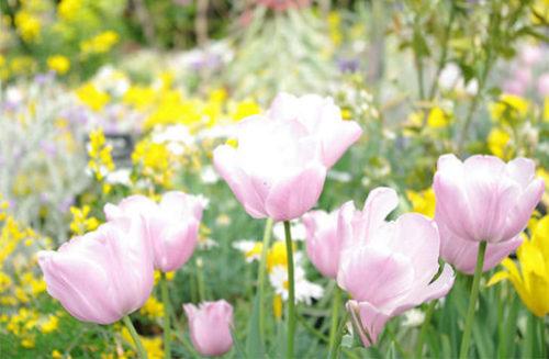 春の花色々
