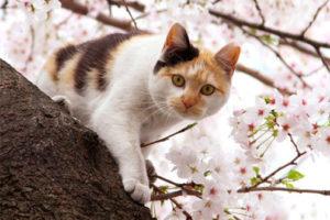 サクラミミ猫