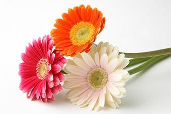 【花・花束】