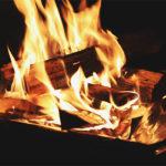 焚き火に使う木はどれがいい?