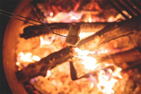 焚き火と木に慣れてフィールドワークを楽しむ