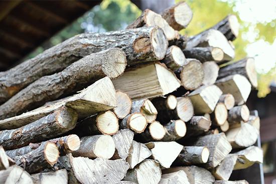 焚き火に使うおすすめの木の種類