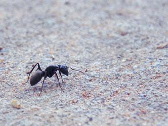 キャンプで遭遇しやすい虫