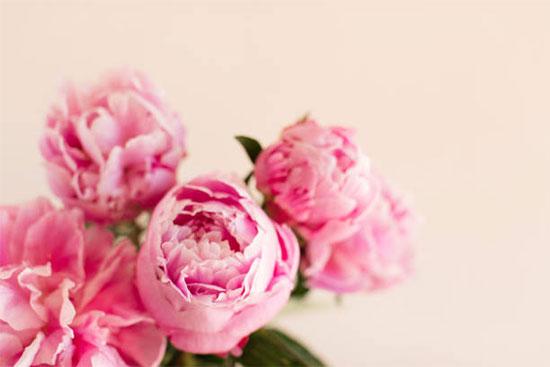 女性を表す花と意味