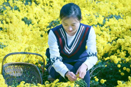 菊人形に使われる菊と職人