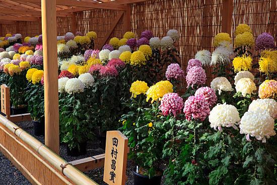 二本松の菊人形展のテーマ